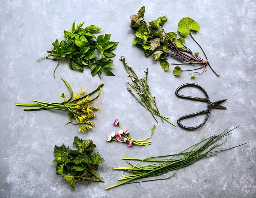 Ätbara blommor, ogräs, blad och skott