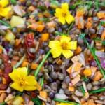 Sensommarsallad med linser och frön