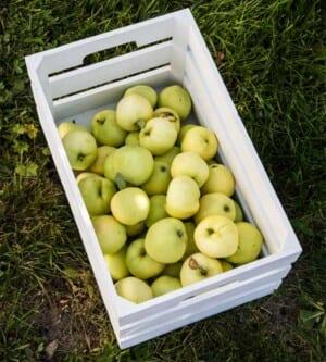 Äpplen i låda