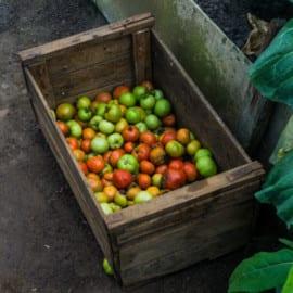 Finca Agroecologica Parque Nacional Viñales Kuba 2015