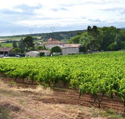 Bli delägare i en fransk vingård