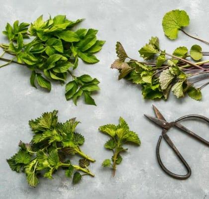 5 sorters ätbart ogräs för nybörjaren