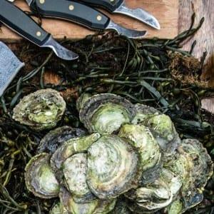 Svenska ostron