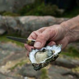 Musselsafari på Västkusten